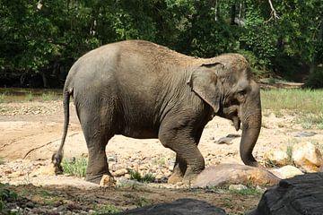 Aziatische olifant van Cora Unk