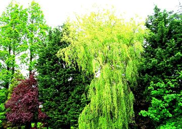 Tree Magic 129 van MoArt (Maurice Heuts)