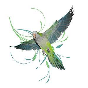 Vliegende muisparkiet