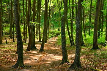 Forest van