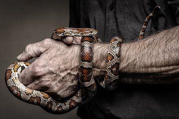 Jef Snake von Bob Van Hoyweghen