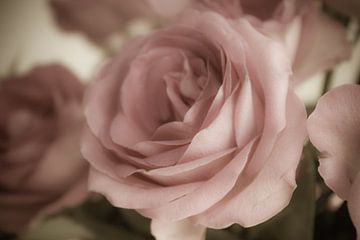 zart rosa von Dagmar Marina