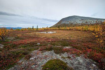 Herfst op de Zweedse fjällen. van Marco Lodder