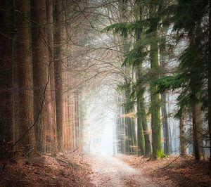 Door de bossen