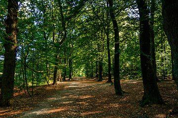Wandelpad in het bos von Stedom Fotografie
