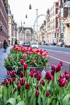 Amsterdam Damrak van