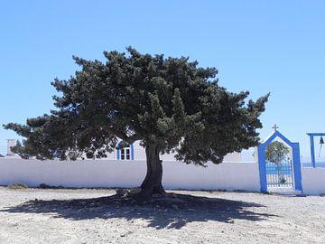 boom in grieks dorpje griekenland van Ingrid Van Maurik