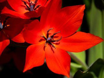 Rote Blume scharf