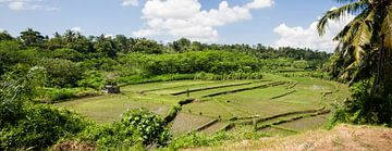 Rijstvelden panorama op Bali van Leanne lovink