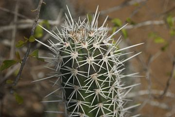 Cactus van Johnno de Jong