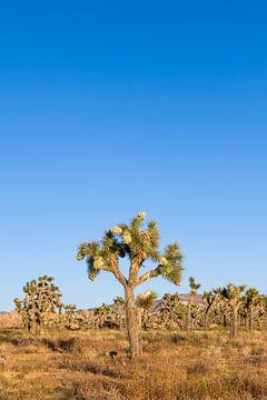 Idyle dans le parc national de Joshua Tree sur Melanie Viola