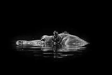 Nijlpaard van Hermann Greiling