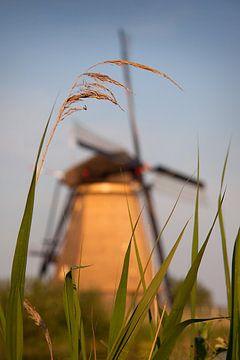 Mühle hinter dem Schilf von Halma Fotografie