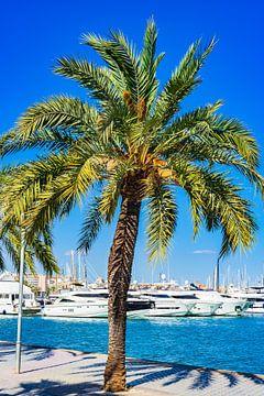 Jachthaven van Palma de Mallorca, Spanje Balearen, Middellandse Zee van Alex Winter