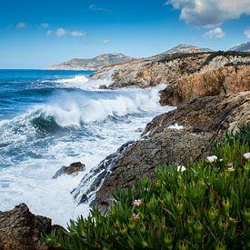 Corsica van Johan Vet