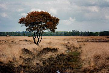 Niederländische Herbstlandschaf von Jos Reimering
