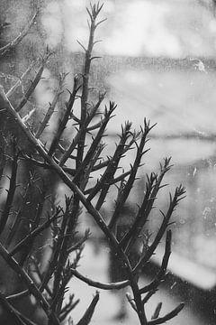 Durch altes Glas von Anne Unverzagt