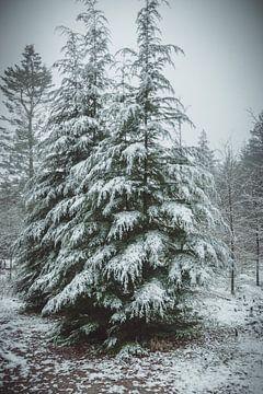 Kerstbomen in de sneeuw van Tom Knotter