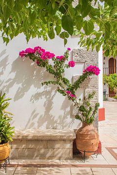 Rosa Blumen auf Lefkas, Griechenland von Bianca Kramer