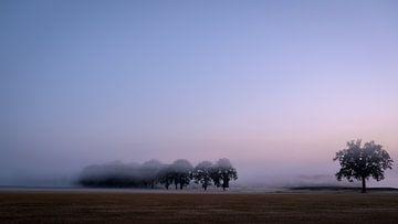 Ochtendmist tijdens dageraad van Laurents ten Voorde