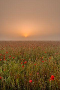 Bloeiend klaprozen in veld bij mistige zonsopkomst in Nederland van Moetwil en van Dijk - Fotografie