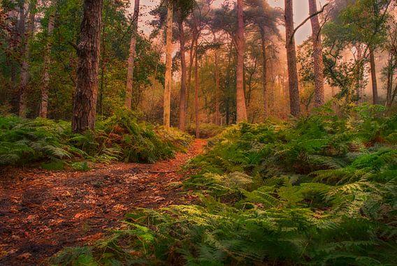 sprookjes bos van Robin Pics (verliefd op Utrecht)