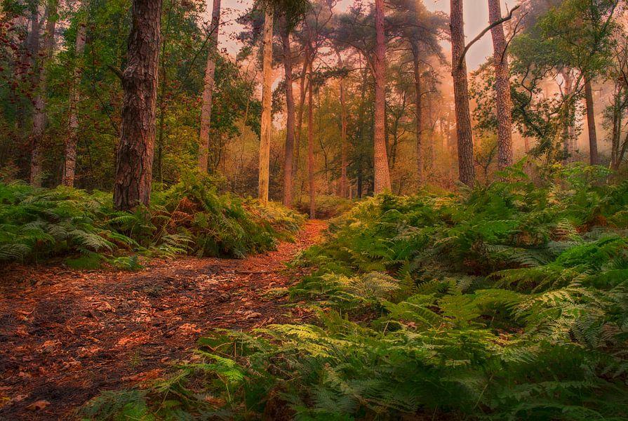 sprookjes bos van Robin Pics