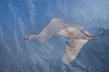 Cygne en vol sur Mieke Korsten
