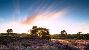 Zonsondergang op de heide van Mark Scheper