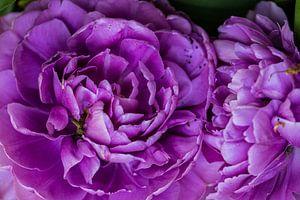 détail de fleur violette avec de nombreuses feuilles de fleurs en bouton sur Margriet Hulsker