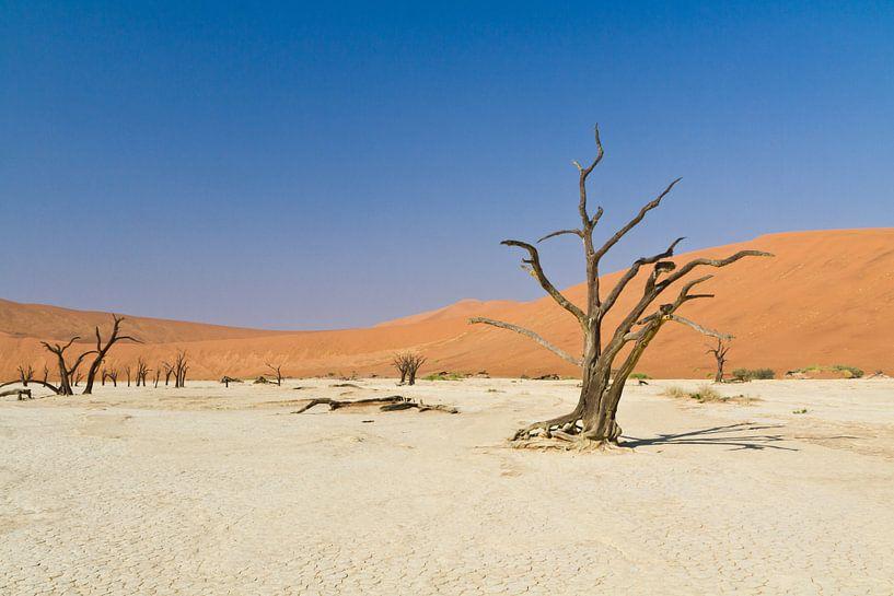 Deadvlei in Namibië van Jan Schuler