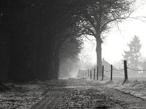 Rustiek klinkerweggetje naar boerderij.  van