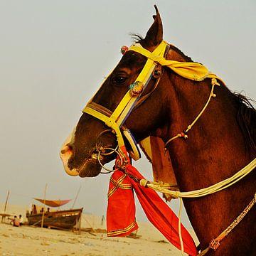 yellow & red van Stino Photo