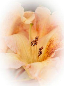 Rhododendron von Rob Boon