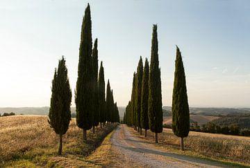 Cipressenlaan, Toscane. von Rens Kromhout