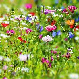 Blumenwiese von fotoping