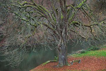Grillige boom in herfsttinten van