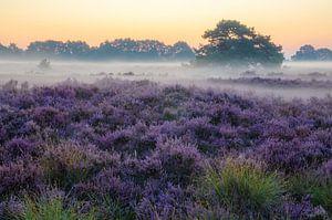 Drenthe Moor, Exloo