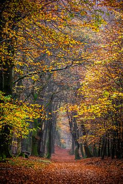 Autumn vibes van Linda Raaphorst