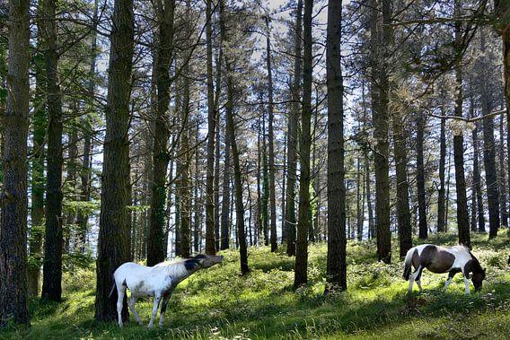 Een flemend paard/ a flehming horse van Harrie Muis