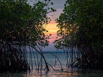 Zonsondergang door de mangrove van Komodo National Park van Rik Pijnenburg