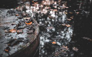 Trittsteine im Wasser von Alwin van Wijngaarden