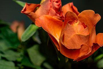 Flora : Rosenknospen von Michael Nägele
