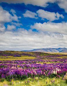 Wilde orchideeën in Arthurs Pass, Nieuw Zeeland van Ricardo Bouman | Fotografie