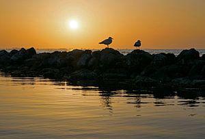 Zonsondergang op de Grevelingen met meeuwen op een golfbreker van