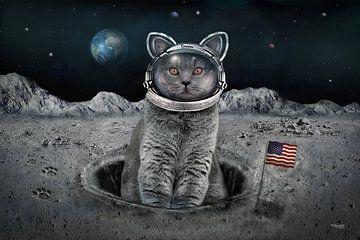 Die Katze auf dem Mond von Stefan teddynash