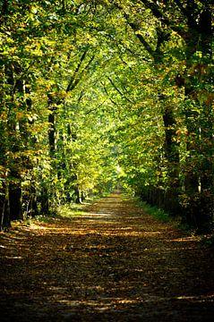 Bospad in de herfst van Thomas Poots