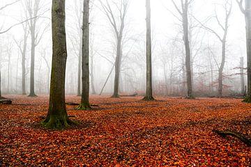 Mistig orange bos van Joris Pijper