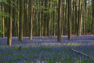 Lente in het bos von Michel van Kooten
