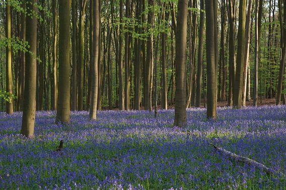 Lente in het bos van Michel van Kooten